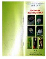 Một số sâu bệnh chính trên cây lúa và biện pháp phòng trừ