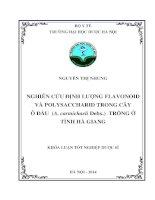 Nghiên cứu định lượng flavonoid và polysaccharid trong cây ô đầu (a  carmichaeli debx ) trồng ở tỉnh hà giang