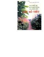 Tìm hiểu về kỹ thuật trồng và chăm sóc cây hồ tiêu