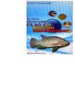 Kỹ thuật sản xuất giống và nuôi cá rô phi đạt tiêu chuẩn vệ sinh an toàn thực phẩm
