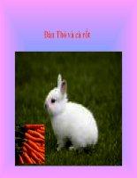 Câu chuyện về thỏ và cà rốt ppsx