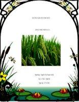 Bài giảng điện tử mầm non lớp Chồi đề tài Nghề trồng lúa