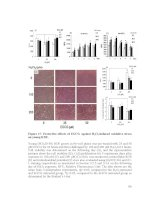 Mitochondrial integrity and antioxidative enzyme efficiency in fischer rats  effects of ageing and epigallocatechin 3  gallate intervention  4