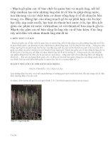 Lý thuyết Vận chuyển các chất trong cây