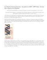 Cấu tạo hóa học của phân tử ADN