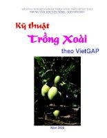 Kỹ thuật  Trồng Xoài   theo VietGAP
