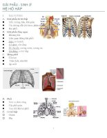GIẢI PHẪU sinh lý hệ  hô hấp
