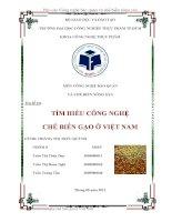 Bài tiểu luận về tìm hiểu công nghệ chế biến gạo ở Việt Nam