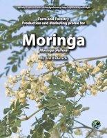 Moringa farm and forestry