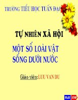 cac loai vat song duoi nuoc lop 4