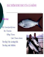 Bài giảng đặc điểm sinh học của một số loài cá biển  phần 2   ngô văn mạnh