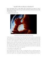 Sự phát triển của thai kỳ: tuần thứ 14