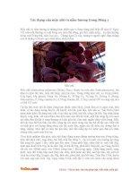 Tác dụng của mộc nhĩ và nấm hương trong Đông y
