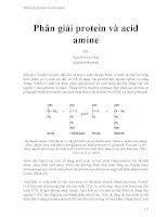 Phân giải protein và acid amine