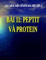 Bài giảng bài peptit và protein hóa học 12 (2)