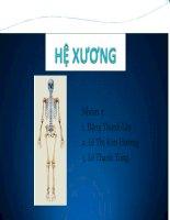 Bài thuyết trình Hệ Xương  Bộ môn: Giải phẫu sinh lý