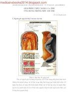 giải phẫu chức năng của tim ứng dụng trong siêu âm tim