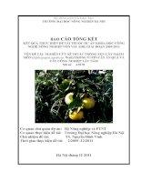 Nghiên cứu kỹ thuật trồng xen cây mạch môn trong vườn cây ăn quả và cây công nghiệp lâu năm