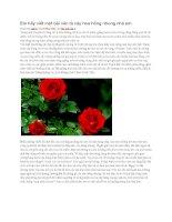 Em hãy viết một bài văn tả cây hoa hồng nhung nhà em
