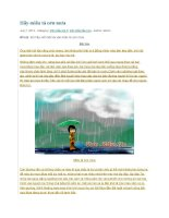 Hãy miêu tả cơn mưa