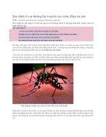 Xác định 3 con đường lây truyền của virus zika ăn não