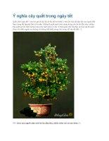 Ý nghĩa cây quất trong ngày tết