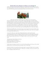 Bài em hãy tả cây phượng vĩ và tiếng ve vào một ngày hè