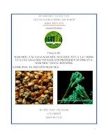Nấm mốc, các loại nấm mốc sinh độc tố và tác động của các loại độc tố nấm, sản phẩm biến dưỡng của nấm mốc trong đời sống