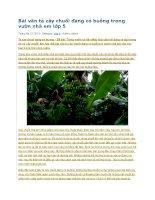 Bài văn tả cây chuối đang có buồng trong vườn nhà em lớp 5