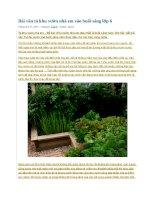 Bài văn tả khu vườn nhà em vào buổi sáng lớp 1
