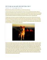 Kể về tâm sự của một chú chó bị lạc văn 6