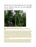 Phân tích hình ảnh bàn tay tnu và cây xà nu trong rừng xa nu của nguyễn trung thành