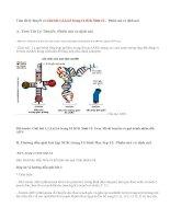 Giải bài 1,2,3,4,5 trang 14 SGK Sinh 12: Phiên mã và dịch mã