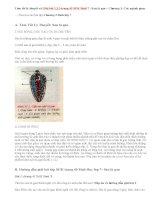 Giải bài 1,2,3 trang 43 Sinh 7: Sán lá gan
