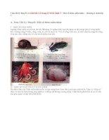Giải bài 1,2 trang 67 Sinh 7: Một số thân mềm khác