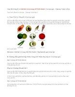 Giải bài 1,2,3,4 trang 107 SGK Sinh 6: Các loại quả