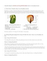 Giải bài 1,2,3 trang 109 SGK Sinh 6: Hạt và các bộ phận của hạt