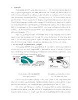 Phương pháp phổ khối lượng (Mass Spectrometry - MS)