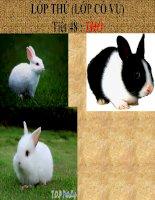 Giáo án sinh học lớp 7 bài thỏ tham khảo