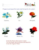 plants flashcards for learning english