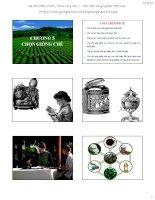 Bài giảng chọn giống cây trồng dài ngày   chương 5  chọn giống chè