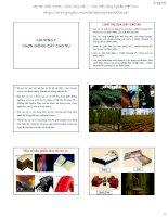 Bài giảng chọn giống cây trồng dài ngày   chương 7  chọn giống cây cao su