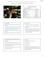 Bài giảng chọn giống cây trồng dài ngày   chương 6  chọn giống cà phê
