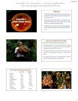 Bài giảng chọn giống cây trồng dài ngày   chương 3  chọn giống nhãn