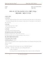Bài 49: Sự đa dạng của thú  Bộ dơi và bộ cá voi