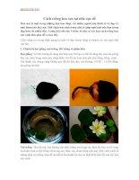 Cách trồng hoa sen tại nhà cực dễ