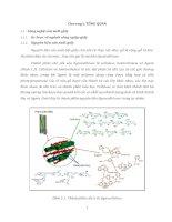 Tổng quan luận văn ứng dụng enzyme trong sản xuất bột giấy
