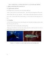 Bài giảng quy trình vận hành một trang trại nuôi cá biển quy mô công nghiệp (tài liệu tập huấn cho cán bộ quản lý trang trại)  phần 2   TS  lê xuân