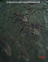 Bài giảng kỹ thuật sản xuất giống và nuôi thương phẩm cá bớp