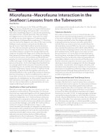 Microfauna–Macrofauna Interaction in the Seafl oor: Lessons from the Tubeworm
